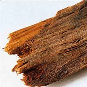The Truth About Yohimbe - Tree Bark